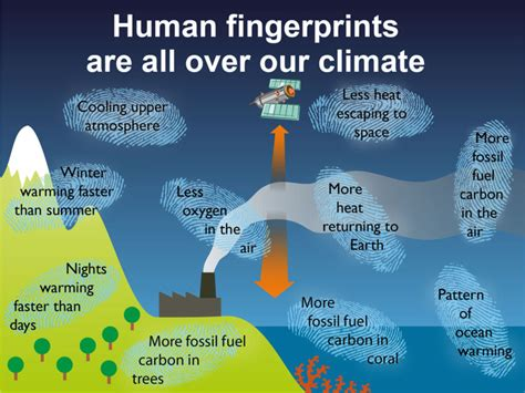 Human Fingerprints