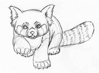 Panda Drawing Drawings Pandas Line Pencil Simple
