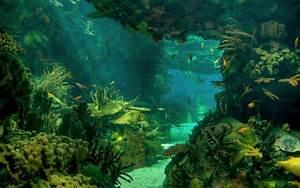 Sea seabed landscape underwater ocean fish wallpaper ...