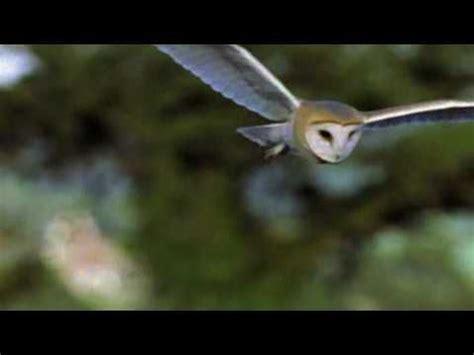 owl images  pinterest owls barn owls