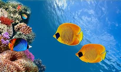 Underwater Ocean Sea Wallpapers Pixelstalk