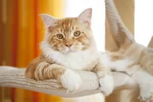 how much do cats cost how much do cats cost should i get a cat cats