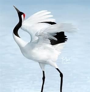 Red-crowned Crane by Sword-Dance on DeviantArt