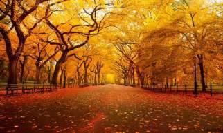 Ohio Pumpkin Festival 2014 by 世界の美しい秋の風景特集 Sworld