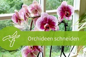 Pflanzen Schneiden Kalender : orchideen schneiden 8 wege zur strahlenden bl tenpracht ~ Orissabook.com Haus und Dekorationen