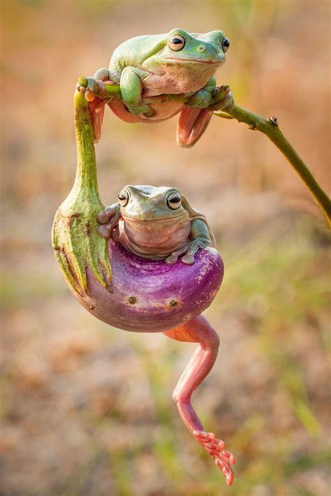 images  crazy cute frogs friends  pinterest