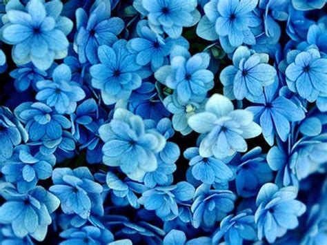 Blue Flowers On Pinterest 4 Free Hd Wallpaper