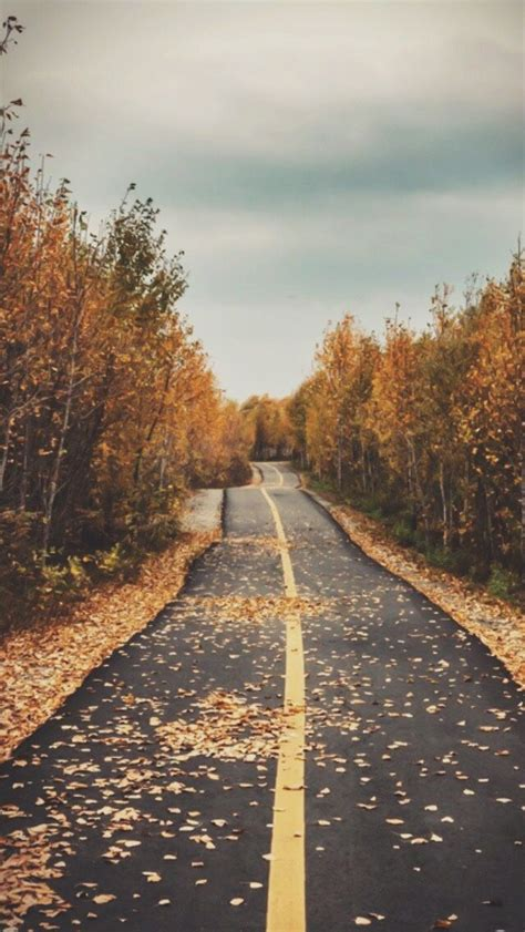 Fall Themed Wallpaper Iphone by Best 25 Fall Wallpaper Ideas On Fall