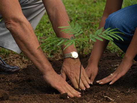 planting a tree plant a tree for earth u what gives
