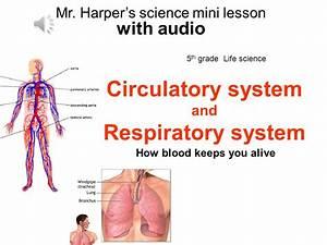 Circulatory System And Respiratory System