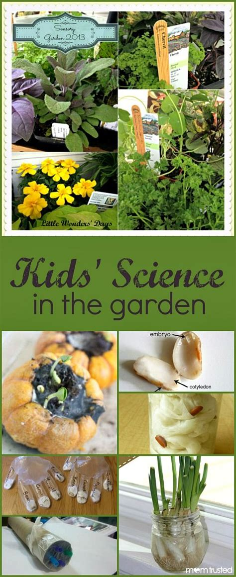 228 best images about gardening ideas on 552 | fbb0866fdebb4d90725bca43e58917c1