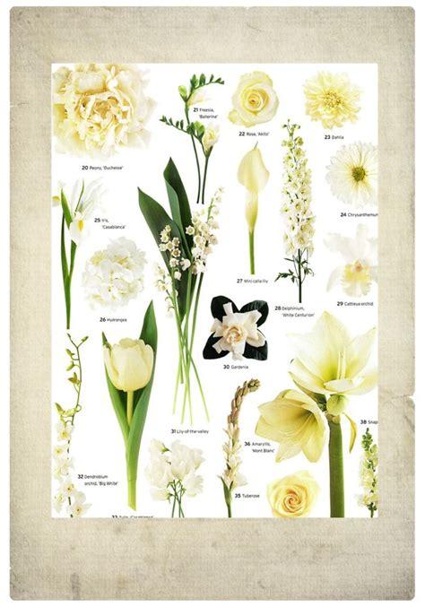 flower types ideas   pinterest types