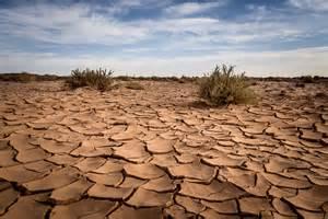 Dry Cracked Desert Landscape