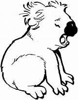 Coloring Bear Pages Bears Koala sketch template