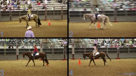 san antonio horse judging livestockjudgingcom