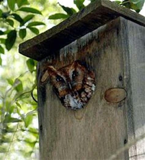 Permalink to Barn Owl Birdhouse Plans