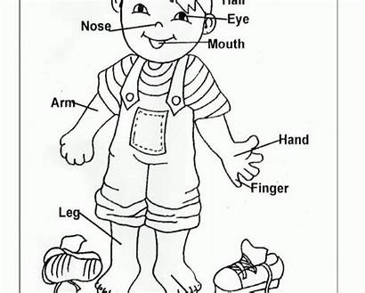 Coloring Worksheets Parts Preschool Pages Clipart Human