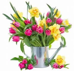 Tulpen In Vase : tulpen und narzissen warum vertragen sie sich nicht ~ Orissabook.com Haus und Dekorationen