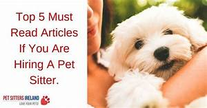 top 5 must read articles if you are hiring a pet sitter With top dog sitters