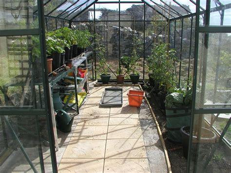 Greenhouse Floor, Potting On & Sideshooting Tomatoes
