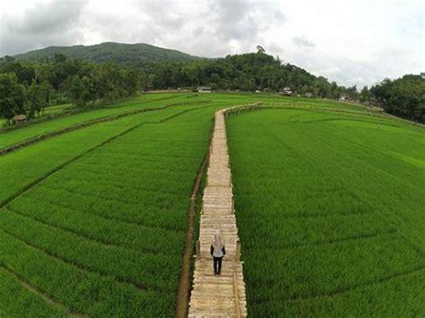 sawah sukorame tempat wisata instagramable   jogja