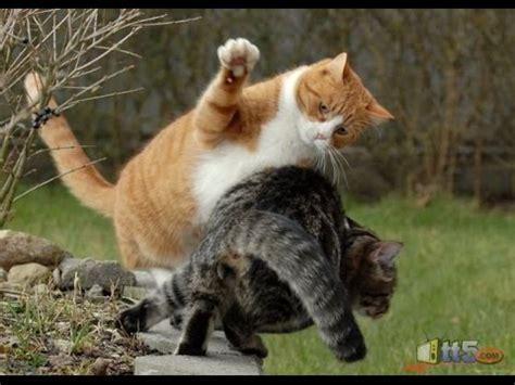 wwe cats msaraa alktt youtube