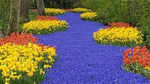 Amazing Flower Garden Wallpaper
