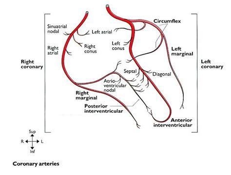 coronary arteries geoffrey  reed life