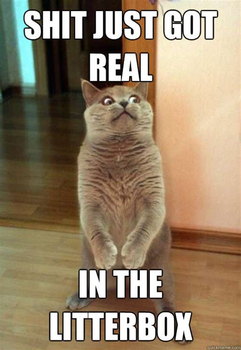 Real Shit Memes - shit just got real cat meme cat planet cat planet