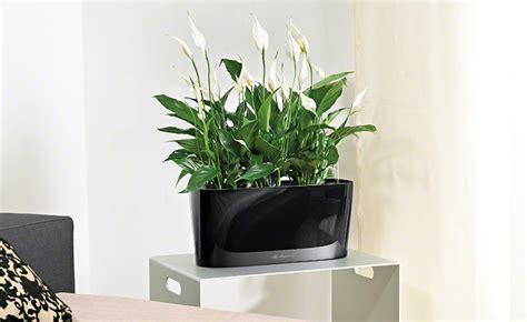 Wohnzimmer Pflanze Groß by Wohnzimmerambiente Durch Pflanzen Aufwerten