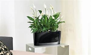 Große Pflanzen Fürs Wohnzimmer : wohnzimmerambiente durch pflanzen aufwerten ~ Michelbontemps.com Haus und Dekorationen