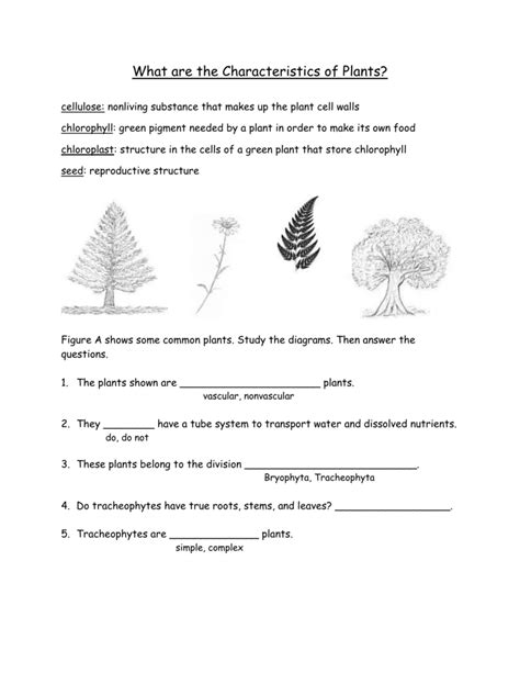 plant characteristics worksheet