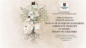 Manual De Manejo De Mandarinas Variedad W  Murcott