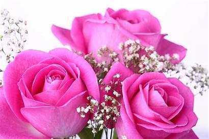 Pink Roses Rose Wallpapers 3d Pixelstalk Desktop