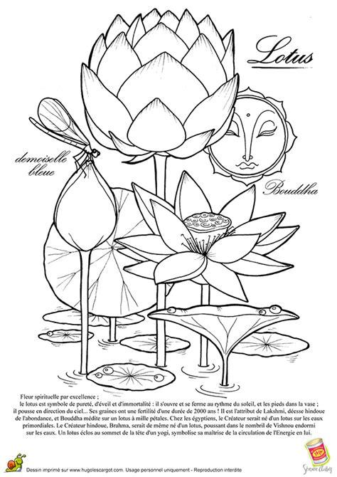 coloriage le lotus la fleur spirituelle bouddha