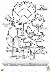 Dessin Fleurs De Lotus : coloriage le lotus la fleur spirituelle bouddha ~ Dode.kayakingforconservation.com Idées de Décoration
