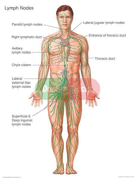 labeled lymph node  body