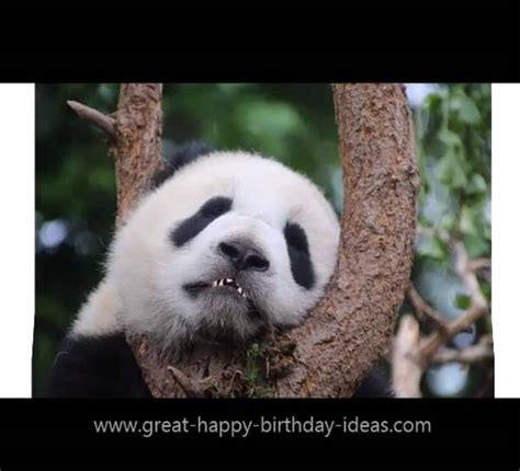 happy birthday panda style  specials ecards greeting