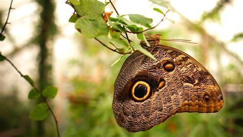 Tropu tauriņu mājas jaunās sezonas atklāšana