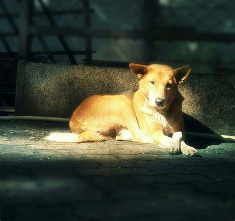 stop violence  animals  enforcing animal