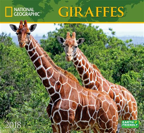 giraffes zebrapublishing