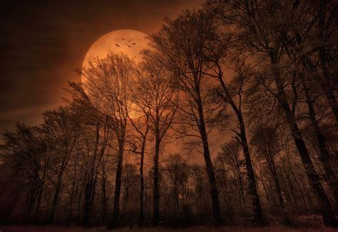 Fall Backgrounds Spooky by Nature Forest Trees Moon Monochrome Spooky Wallpapers