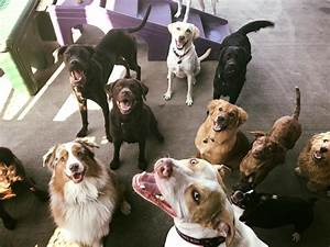 Doggie daycare red dog pet resort spa for Red dog daycare