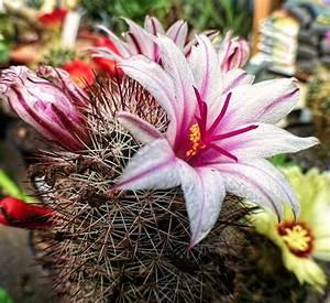 Tropische Pflanzen Kaufen : exoticplants der spezialist f r exotische pflanzen ~ Watch28wear.com Haus und Dekorationen