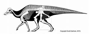 Hypacrosaurus stebingeri by ScottHartman on DeviantArt