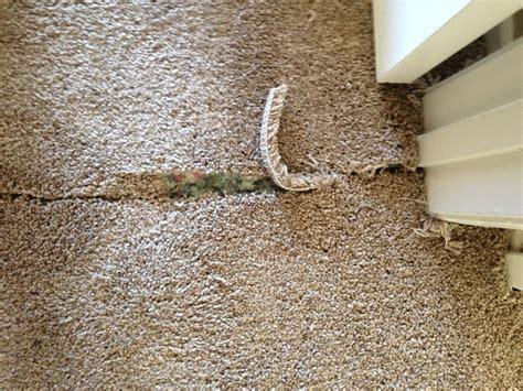 Carpet Seam Repair You   Carpet Vidalondon