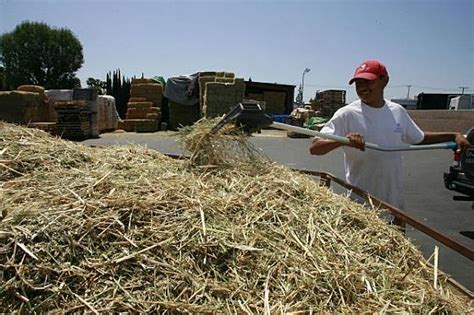 hay is high horse owners say neigh orange county register