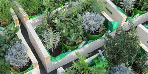 listino prezzi piante da giardino 187 bottega il giardino degli aromi