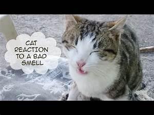 Funny cats vide... Funny Cat Videos