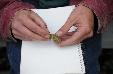 bureaucracy stalls medical marijuana times union